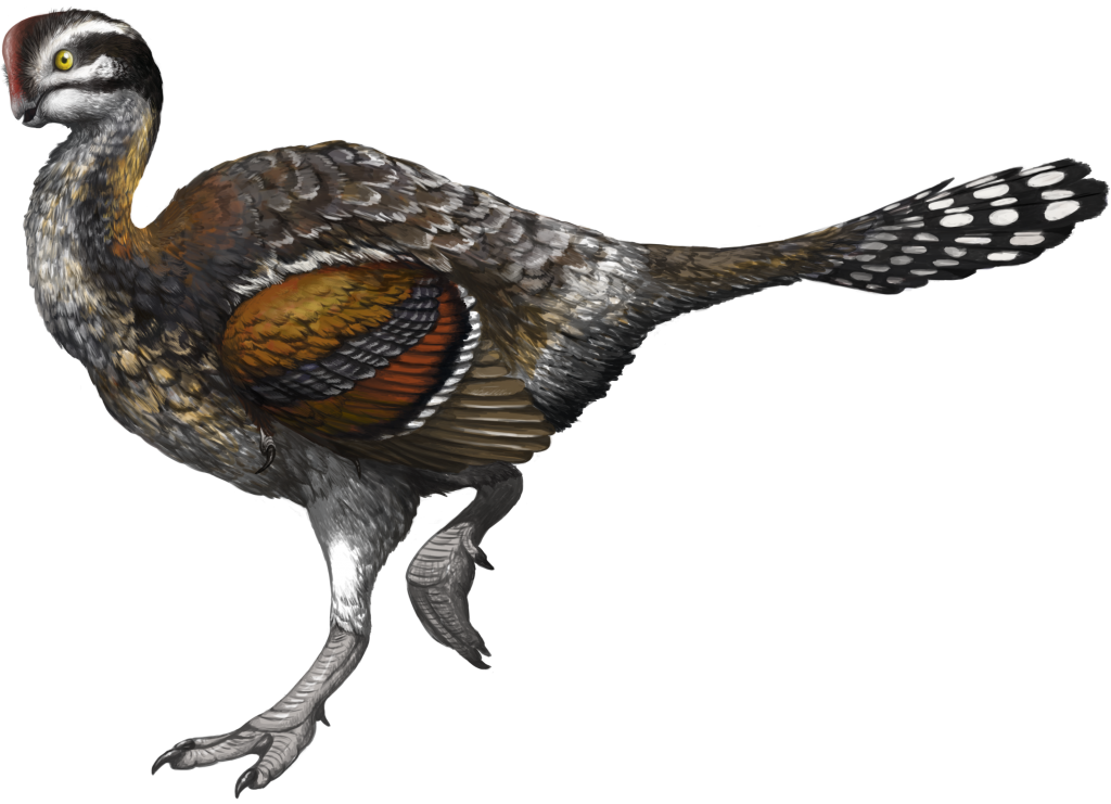 An oviraptor from the Flaming Cliffs in Mongolia, by paleoillustrator Emily Willoughby.