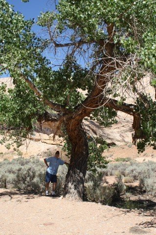 Deb's husband poses with a Black Dragon Cottonwood