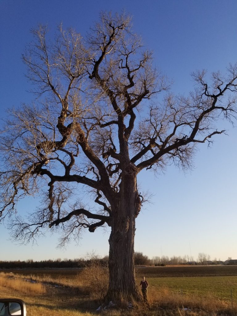 Emily stands beside a tall Cottonwood