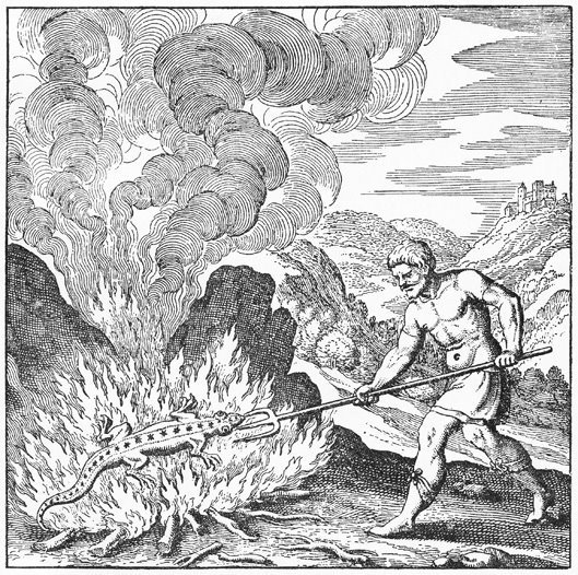 """""""A salamander lives in the fire, which imparts to it a most glorious hue"""" - The Story of Alchemy and the Beginnings of Chemistry by M. M. Pattison Muir"""